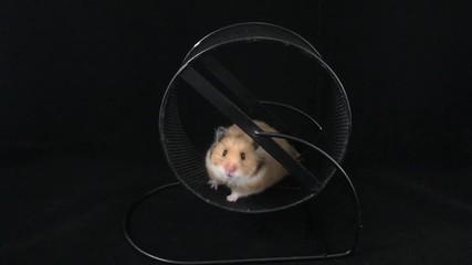 adultes hamster vidéos maison mexicaine vidéos porno