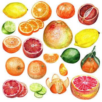 Citrus set watercolor