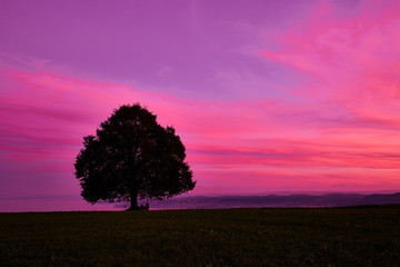 Foto op Plexiglas Roze Silhouette tree on field against romantic sky at sunset