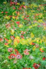 Multiple exposure flowers of different types