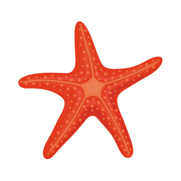 Red starfish in cartoon style for summer design elements isolated on white background