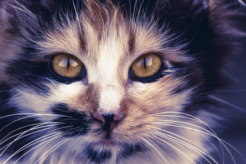 Close up of  cat face. Fauna background. International Cat Day, Pets and lifestyle concept