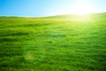 Spring fresh bright green grass at sunset on a warm sunny day. Beautiful fields and sunsets.