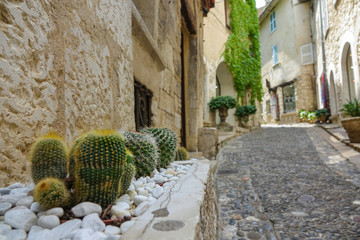 LOW ANGLE Prickly cactuses grow on the side of the empty street in medieval town