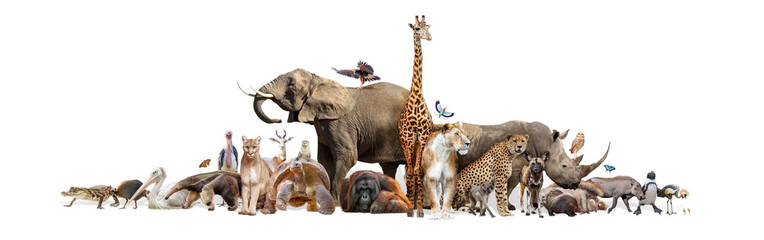 Wild Zoo Animals on White Web Banner Fotomurales