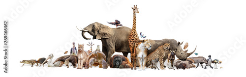 Fototapete Wild Zoo Animals on White Web Banner