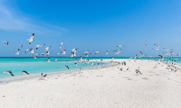 Beautiful Caribbean beach, in Los Roques Archipelago, Venezuela