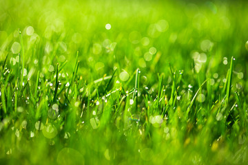 Wall Mural - green grass with water drops