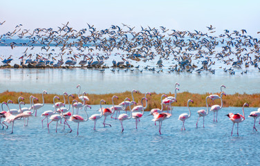 Manyas Bird Paradise National Park - Balikesir, Turkey