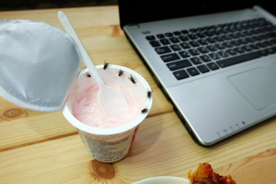 Many flies or house fly are swarm on yogurt and food on the desk, Flies are carriers of various pathogens.