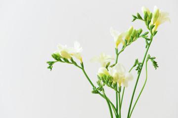 Poster de jardin Muguet de mai Beautiful freesia flowers on light background