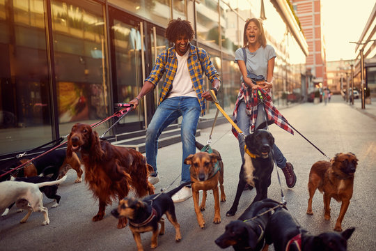 girl and man dog walker with group of dogs enjoying in walk..