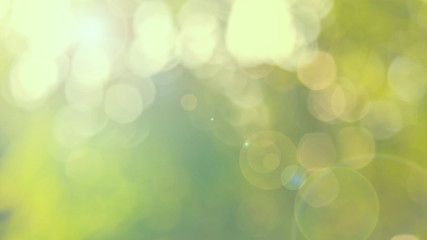 Defocused abstract nature background yellow leaves and bokeh lights. Royalty high-quality free stock image of natural blurred bokeh background from leaf with copyspace for text advertising design
