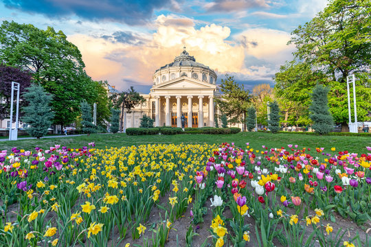 Romanian Atheneum at sunset with red and yellow flowers in front. Bucharest, Romania.
