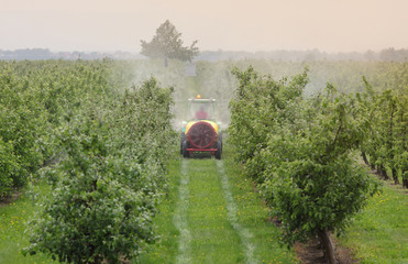 Tractor spraying insecticide or fungicide in peach orchard