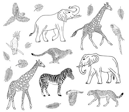 Vector hand drawn doodle sketch collection set of african animals isolated on white background