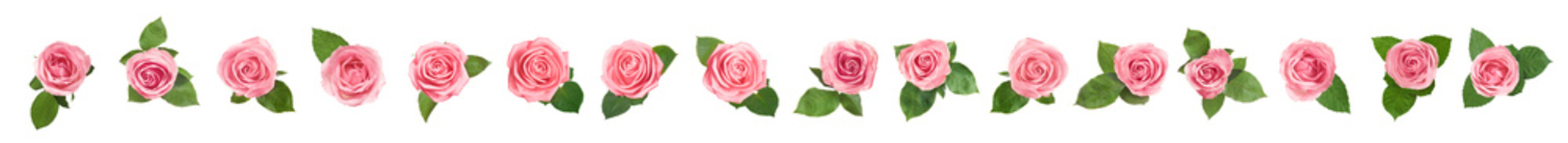 Printed roller blinds Roses Set of beautiful tender pink roses with leaves on white background, top view. Banner design