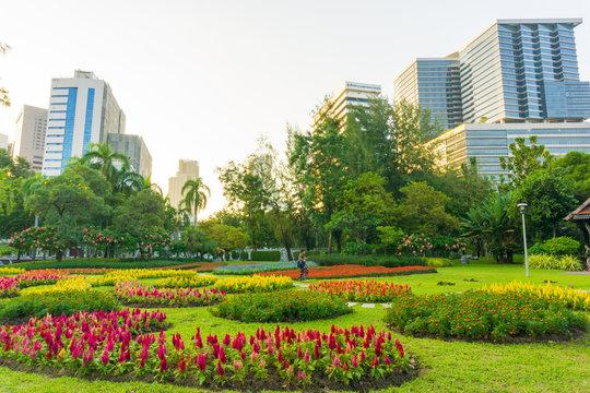 City public park with modern building Lumpini park