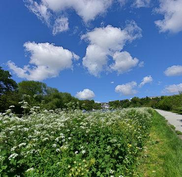 s Path Near Richmond