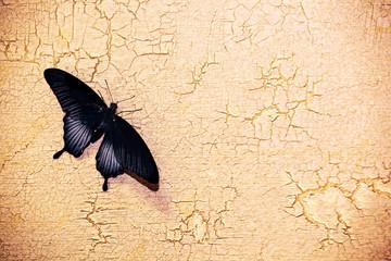 Fotobehang Vlinders in Grunge butterfly sharp stone wall background