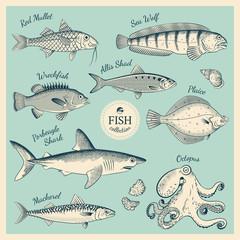 Vintage fish illustration set