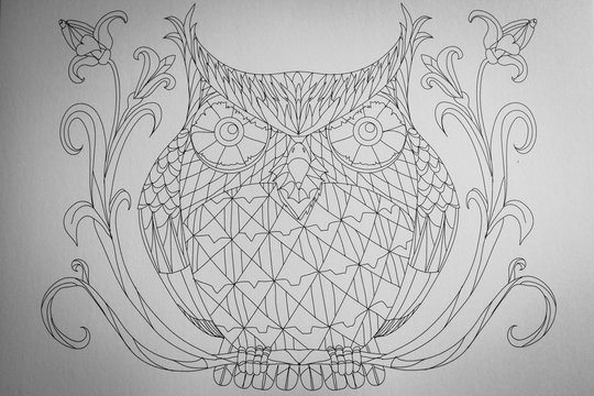 Arrière plan noir et blanc motif hibou