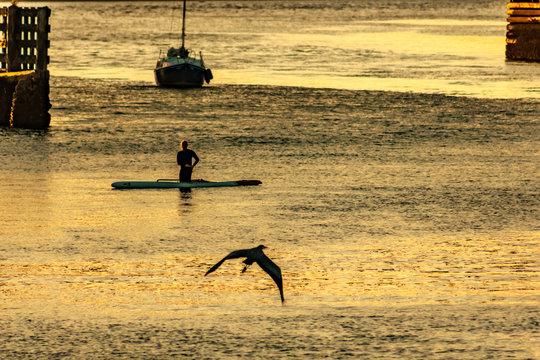 sailboat paddleboard and great blue heron