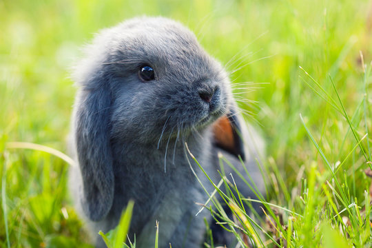 Little cute rabbit (bunny) sitting in the grass