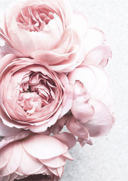 pink white peony flowers