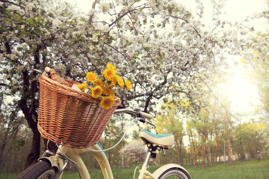 bottle of wine and flowers in a bicycle basket, under a flowering fruit tree in the park. picnic spring weekend