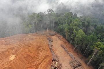 Logging. Aerial drone view of deforestation environmental problem.