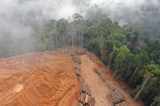 Logging. Aerial drone view of deforestation environmental problem.