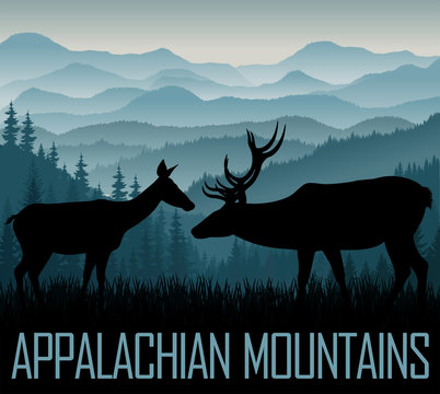 vector Appalachian Mountains with couple of white tailed deers