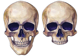 colored watercolor drawing human skull anatomy realism art. painting colors. Cover, sticker, website, illustration, poster, design.