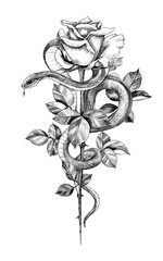 Hand Drawn Monochrome Snake with Rose
