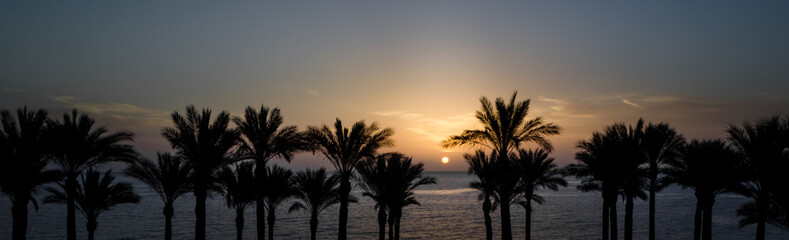 Photo sur Plexiglas Palmier panoramic view of the setting sun among the palm trees in the Red Sea in Egypt