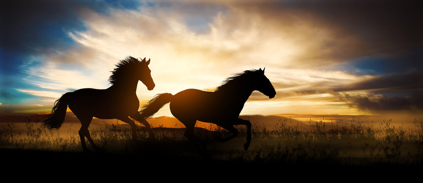 two free horses run at sunset