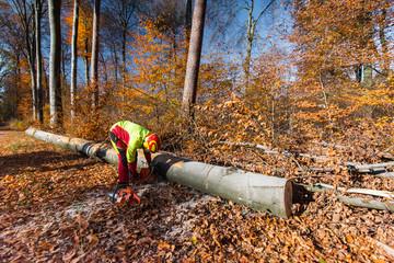 Lumberjack with chain saw