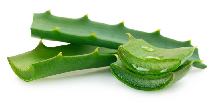 Fresh aloe vera on white background