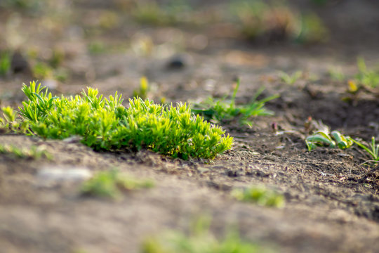 new, fresh grass sprouts from the ground in spring