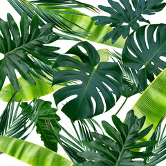 Tropikalne tło z liści monstera i bananów