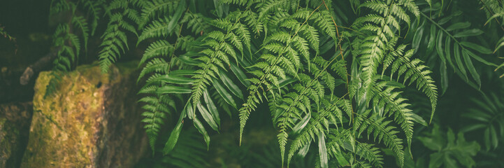 Banner Green leaves of tropical fern plants,  green jungle summer background  in  vintage tone Fotoväggar