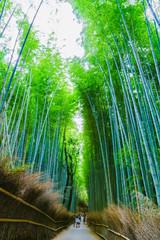 Deurstickers Bamboo [和風イメージ] 京都の竹林