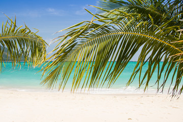Beautiful paradise beach with palm trees and blue sky for travel and vacation in holiday relax time