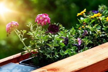 Bepflanzter Blumenkasten auf einem Balkon