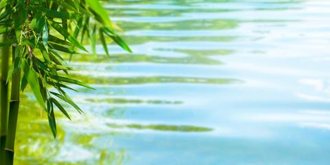 bambuszweig und wasser