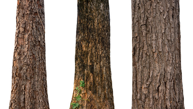 isolated tree trunk Collection on White Backdrop