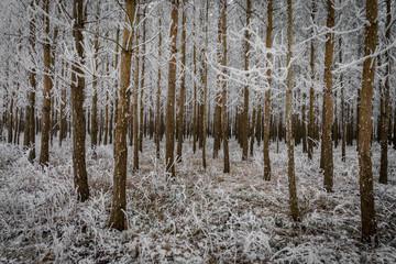 Mit Raureif überzogener winterlicher Wald