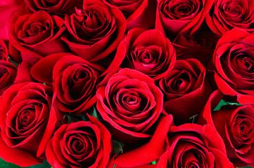 Fototapete - Fresh red roses flower background