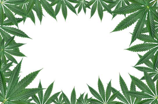 Marijuana leaf frame isolated on white background